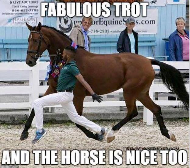 Fabulous Trot!