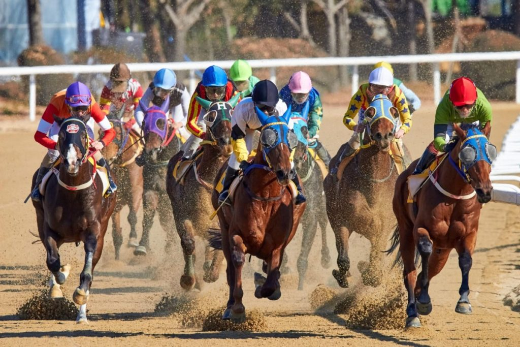 Hold Your Horses: A Beginners Guide In Betting An Online Kentucky Derby Race